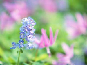 soft_photography_-_beautiful_wildflower_photography_dream_04_1280x960
