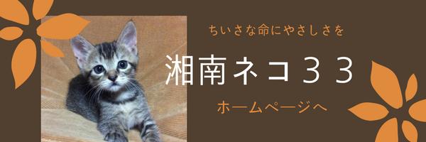 湘南猫みみ
